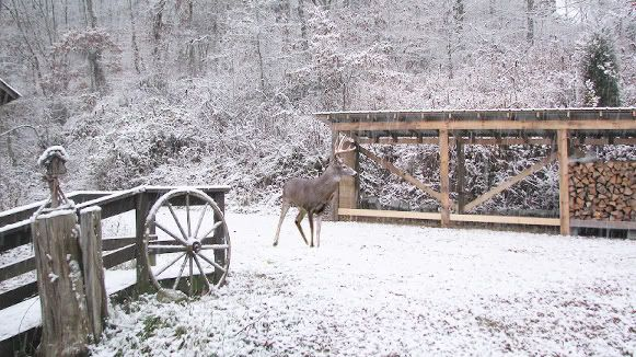 11-17-08FirstSnowDeer.jpg