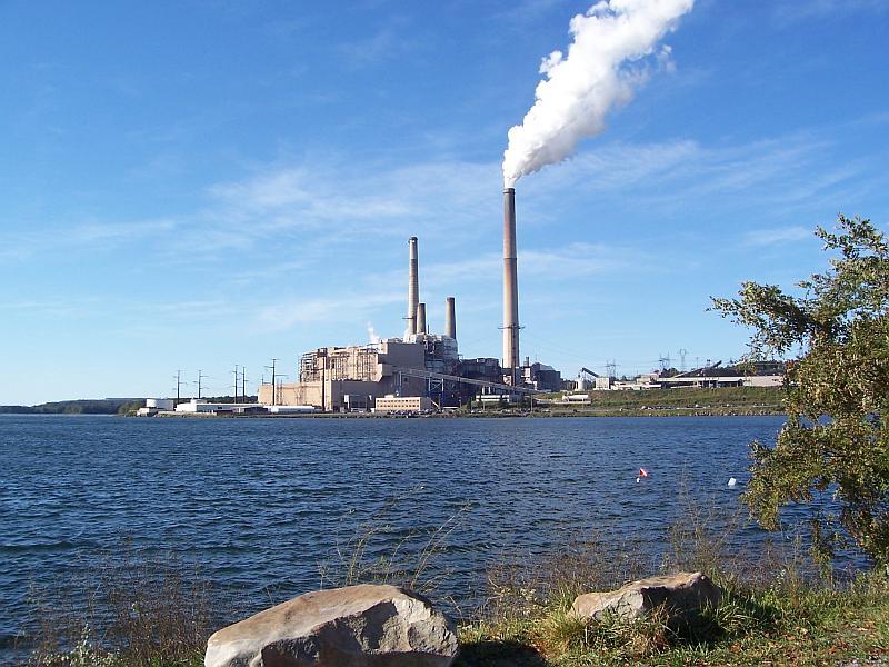 1664-01-Mt_Storm_plant-Debra_Everhart.jpg