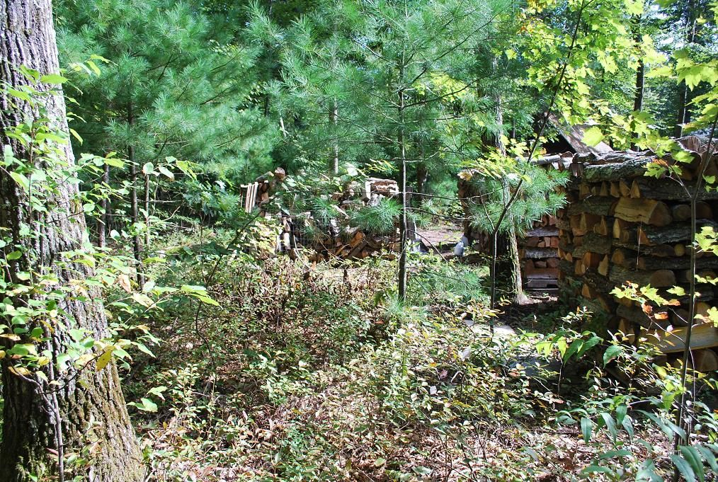 2- Before clearing Woodshed 001.JPG