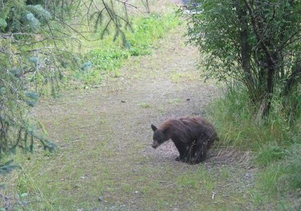 Bear in the woods.JPG