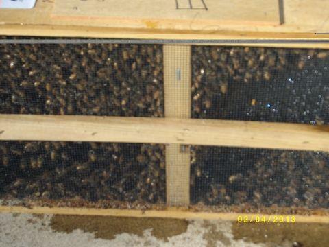 bees resize.jpg