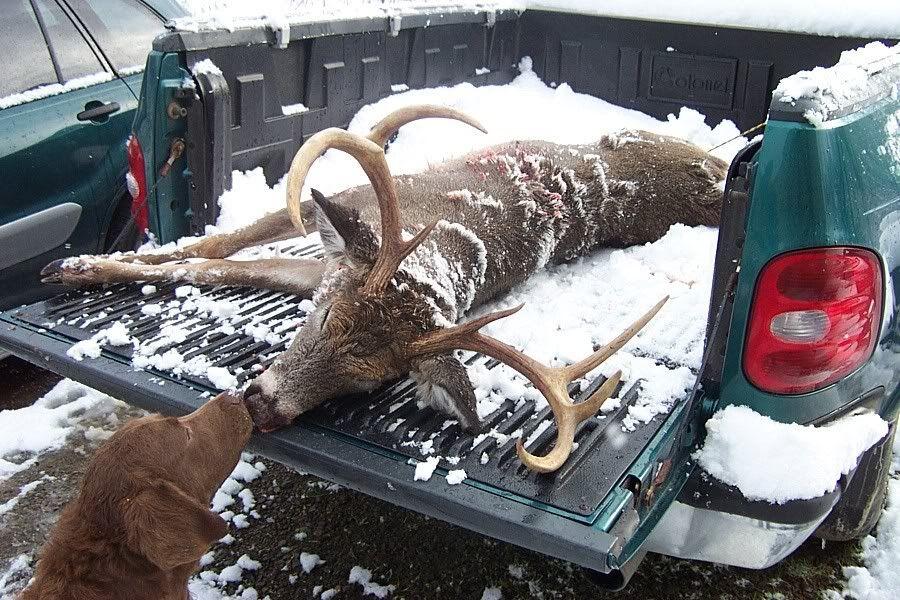 Deer08033.jpg