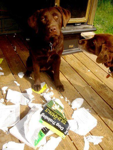 dog training for dummies.jpg
