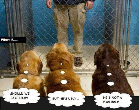 Dogs at the pound.jpg