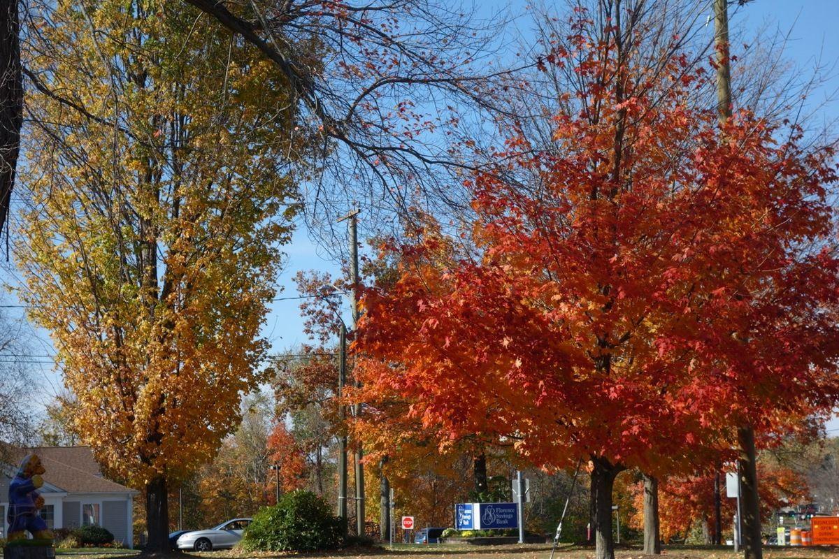 fall3.jpg