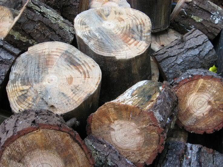 Firewood001.jpg