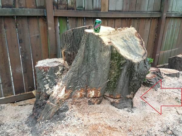 free wood2.jpg