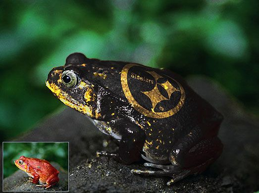 frog_lg.jpg