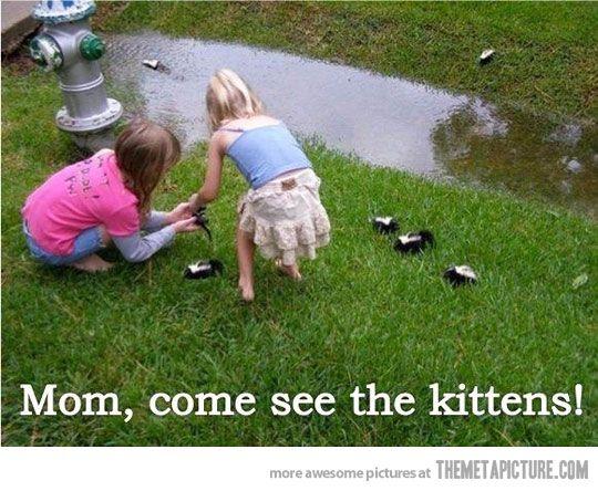 funny-racoons-little-girls-kittens.jpg