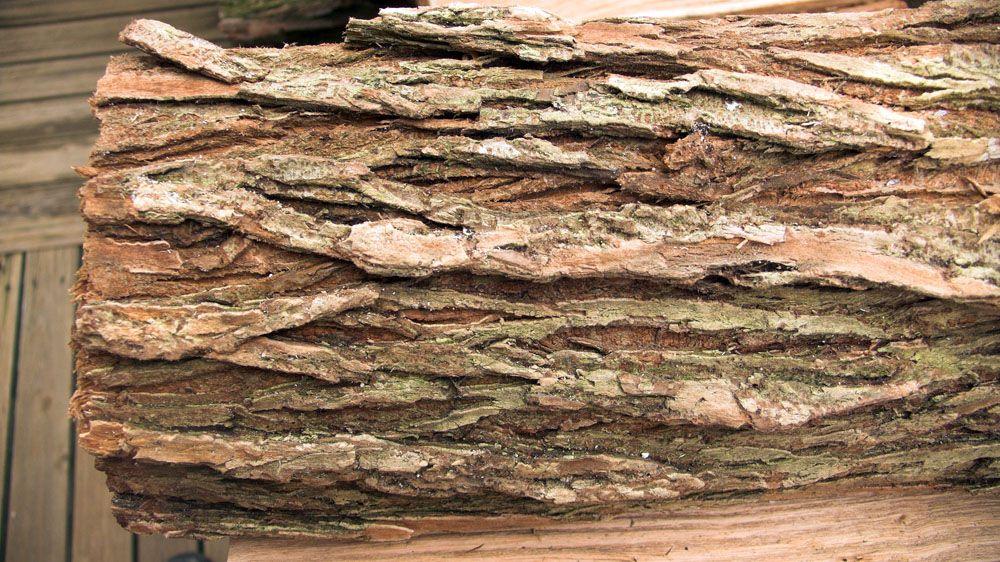 maybe elm bark.jpg
