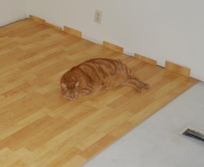 Milo floor.jpg