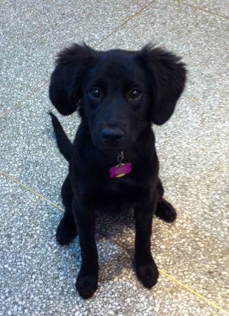 Moxie puppy.jpg