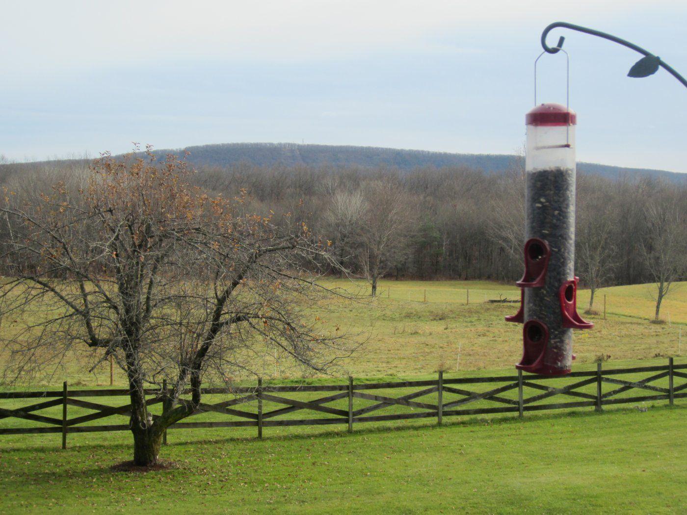 pasture 002.jpg