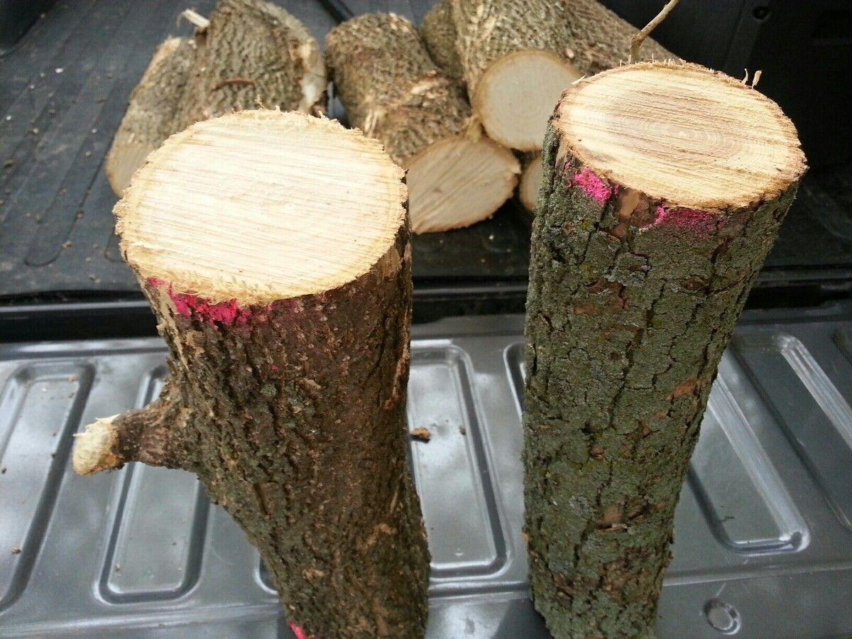 scrounge wood.jpg