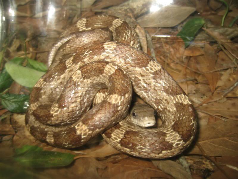 Snake060111_20110601_1210Medium.jpg