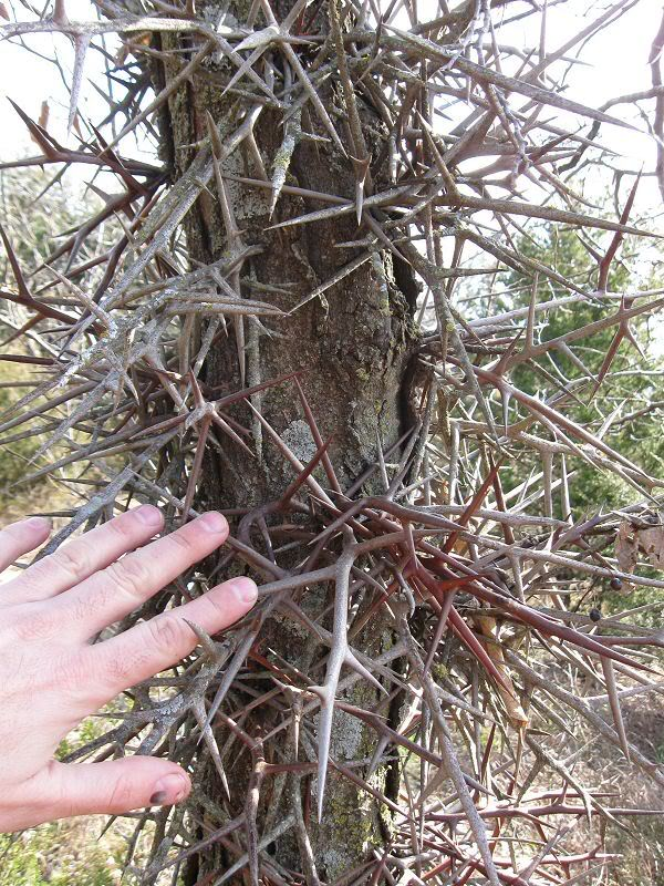 specimen2.jpg
