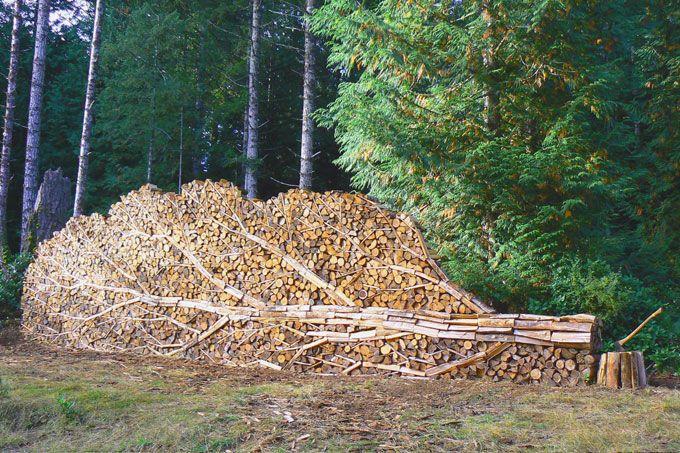 tree stack.jpg
