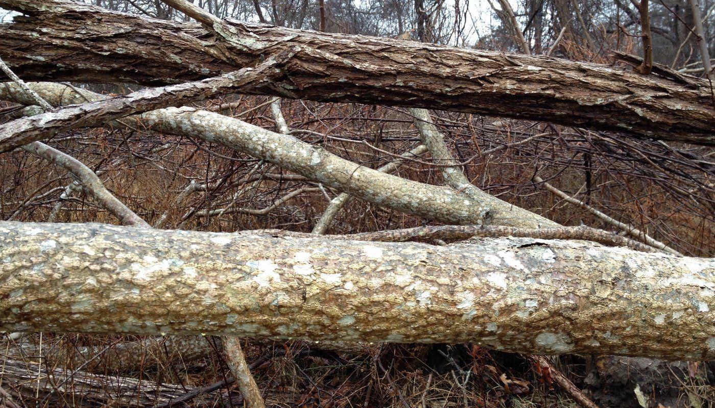 Trees1 crop.JPG