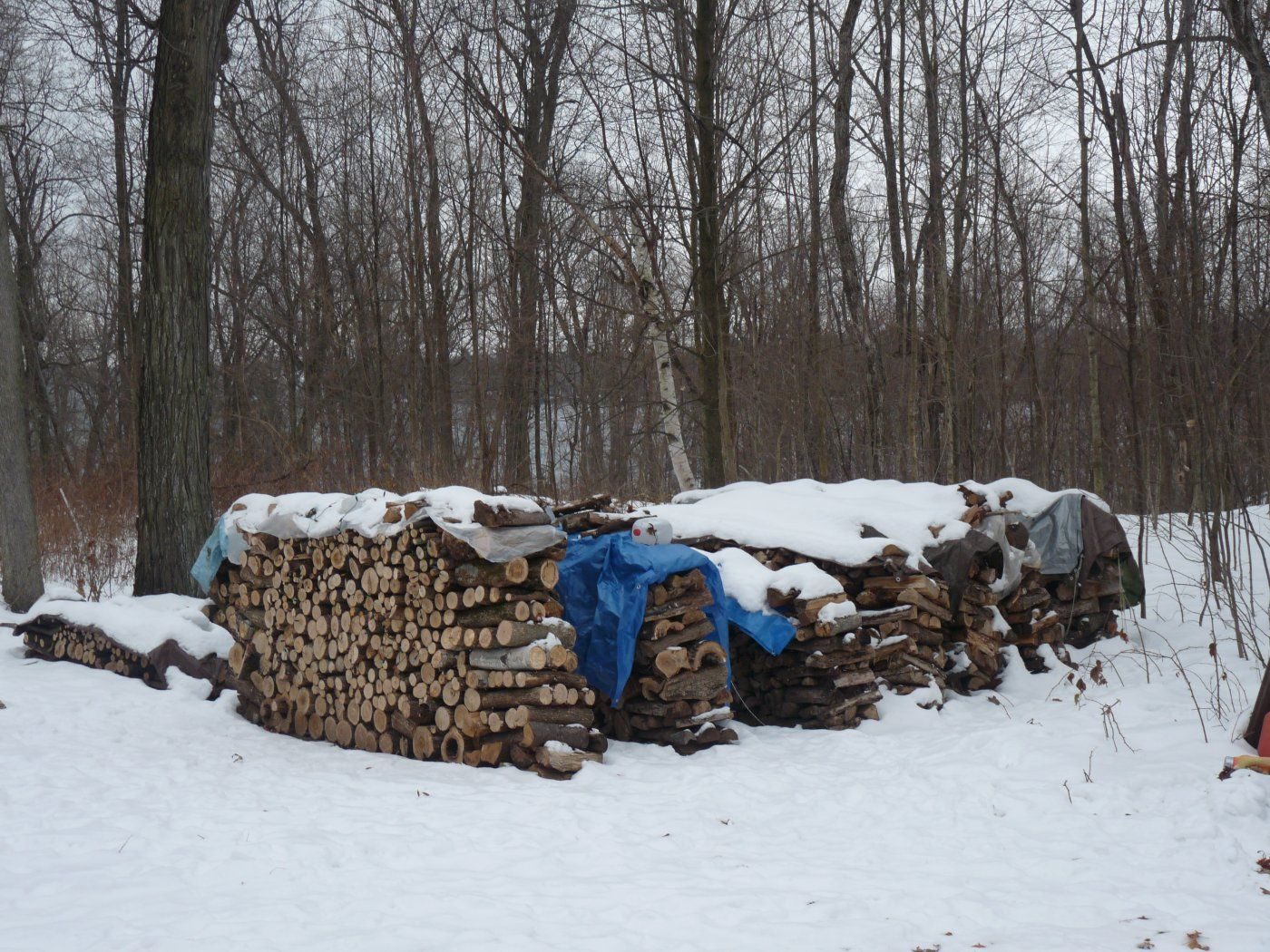 Winter 2010 088.JPG