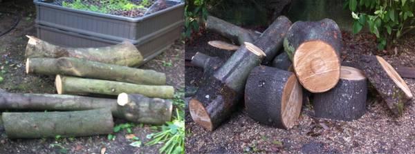 wood to ID.jpg