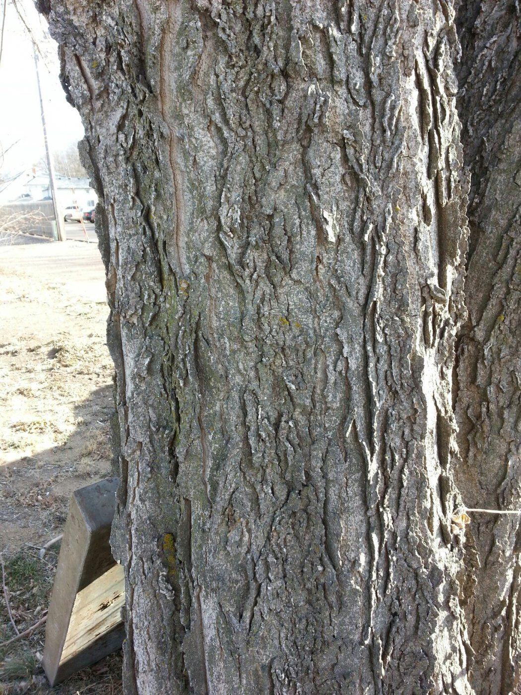wood18.jpg