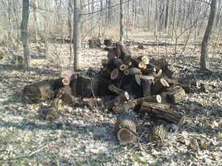 Green Monster Log Splitter