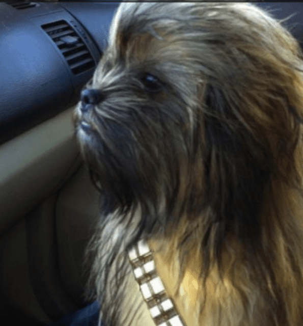 Wookie Names For Dogs