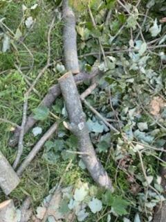 Firewood #2.jpg