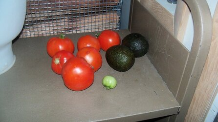 tomato plant and wood shed 006.JPG